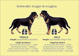 Rottweiler Size And Weight Chart Rottweiler Heights And Weights Chart Rottweiler Training