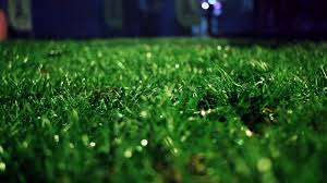 green grass soccer field. Lawn-at-night-closeup-of-green-grass-close-up-grass-background-trimmed-grass -on-meadow-at-night-green-grass-soccer-field-panning-on-grass-field-at-park-  Green Grass Soccer Field