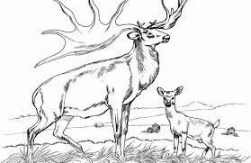 Small Picture elk coloring pages Just Colorings