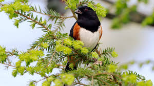 beautiful wild animals wallpapers. Delighful Wild Bird Animal Beautiful Wild Wings Exotic Birds Wallpaper  1920x1080  536813 WallpaperUP On Beautiful Wild Animals Wallpapers I