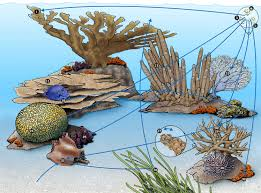 Coral Classification Chart Coral Reef Food Web National Geographic Society