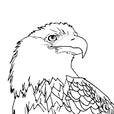 Attractive Design Ideas Bald Eagle Coloring Pages Improved Printable