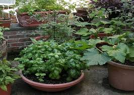 Small Picture Awesome Container Vegetable Gardening Ideas httplanewstalk