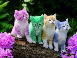Cute Cat Wallpapers - Top Free Cute Cat ...