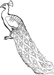 Small Picture A Lovely African Congo Peacock Coloring Page Kids Play Color
