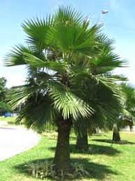 Palm Tree Pictures