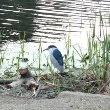 photo of lake temescal oakland ca united states