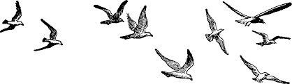 birds flying black and white clipart.  Birds Fly Clipart Black And White In Birds Flying L