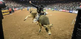 pro bull riding. Contemporary Pro PHOTO Fabiano Vieira Rides Hot Toddy At The Professional Bull Riders  Monster Energy Invitational For Pro Riding A