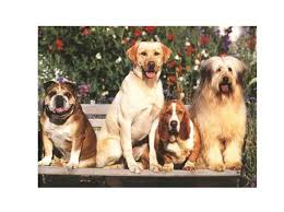 Bond And Co Dog Size Chart Canine Intelligence Breed Does Matter Psychology Today
