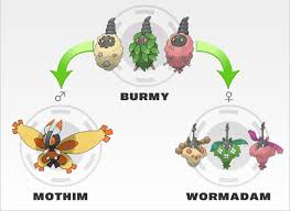 Burmy Evolution Chart Burmy Evolution Pokemon Cute Pokemon Eevee Evolutions