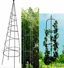 Obelisk Plant Support Ring Style And Form To Wild Vines And RosesClimbing Plant Support