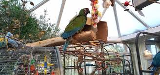 10 ideas for homemade parrot toys