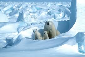 Climate change on track to wipe out polar bears by 2100