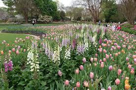 dallas arboretum botanical gardens