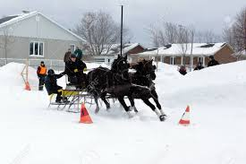 Canadian Light Horse Quebec Canada January 22 Canadian Horse Pulling Sleigh In
