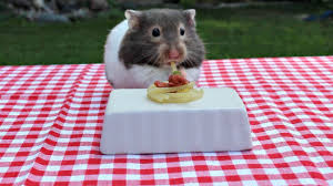 Italian bbw hamster 2