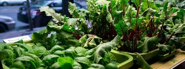 if you are a new to indoor vegetable gardening then read on because this guide will help you grow the best vegetables right from your own countertops