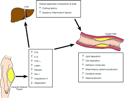 Adipose Tissue And Atherosclerosis Arteriosclerosis