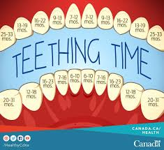 Excellent Teeting Chart When To Expect To See Those Teeth