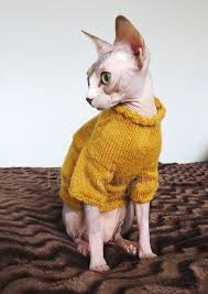 sweaters for cats best 25 sweaters for cats ideas on cat haircut black