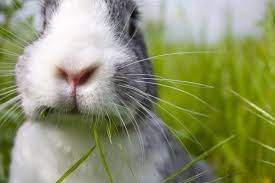 animals used for experiments animal facts peta kids close up of cute rabbit outside