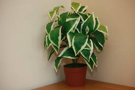 office indoor plants. UK-Gardens Large Artificial Scindapsus Plant Green Foliage Office Or House Indoor UKG3048 Plants