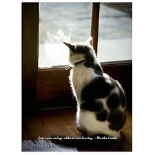 Loss Of A Cat Quotes Simple Cat Loss Quotes On QuotesTopics