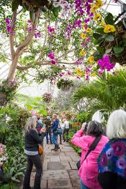 look up this year at the orchid show courtesy the new york botanical garden
