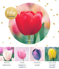 tulip meaning and symbolism ftd com