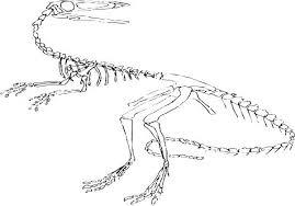 Dog Bone Coloring Page Dog Bone Coloring Page Dinosaur Bones Pages