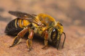ground dwelling bees 3 surefire ways to get rid of ground bees fast plus 9 must know