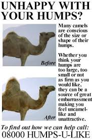 Image result for hump day camel