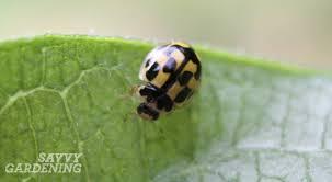 garden friendly bugs 5 surprising