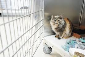 humane society kittens for adoption.  Kittens Toronto Humane Society Holding Cat Adoption Drive In Kittens For Adoption T
