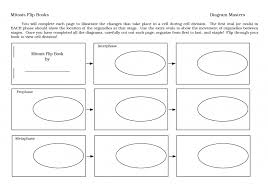 cell cycle flip book cell cycle phases and description detailed cell cycle the cell cycle
