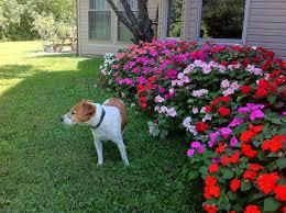 awesome simple flower garden ideas for simple garden ideas