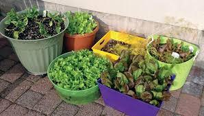 vegetable gardening a beginner s guide