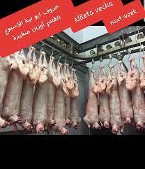 خروف ابو لية الاسبوع القادم... - Impex Food AB Storheden