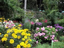 Осенние цветы осенний сад многолетние растения астра  осенний сад фото фотография