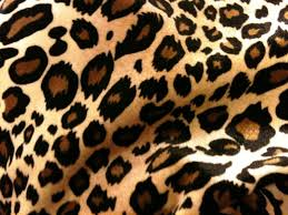 Cheetah Print Decor Interior Decor Unique Cheetah Print Wallpaper For Wall Cheetah
