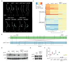Figures And Data In Epigenetic Silencing Of A