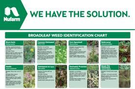 Nufarm Insider Broadleaf Weed Reference Sheet