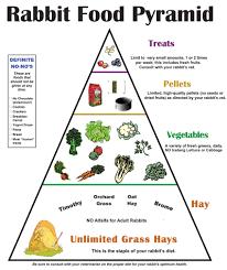 animal food pyramid. Brilliant Food Intended Animal Food Pyramid U
