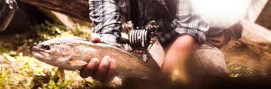Fishing Forecast And Stream Conditions Davidson River