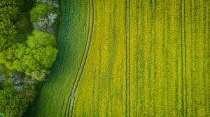 grass field aerial. Edit With Snappa · Aerial Photography Of Wide Green Grass Field A