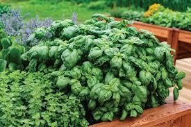 herb gardening for beginners closing