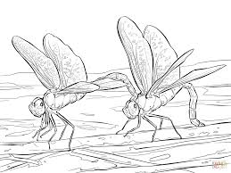 Small Picture Dragonfly coloring pages Free Coloring Pages