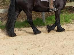 Stuwend Been En Dragend Been Beenpositie Paard