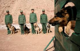War Dogs Of The World – Foreign Policy